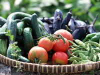 野菜は専門業者より大量仕入れ